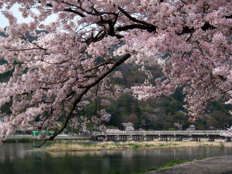 嵐山の魅力再発見!全てが分かる『嵐山・渡月橋』徹底ガイド!