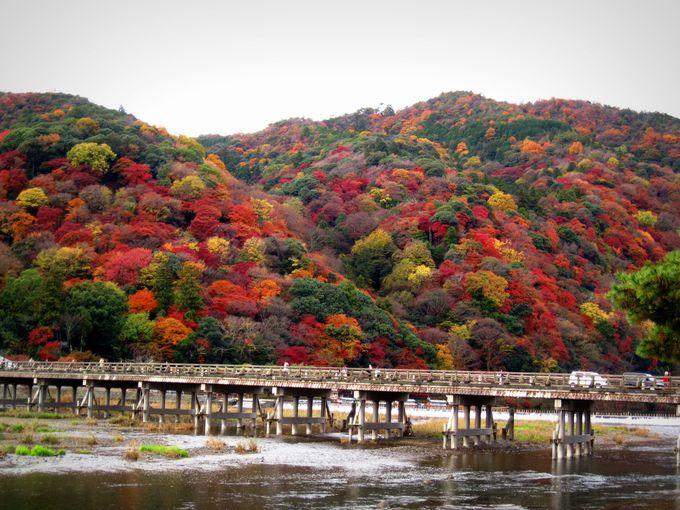 春は桜、秋は紅葉の名だたる名所