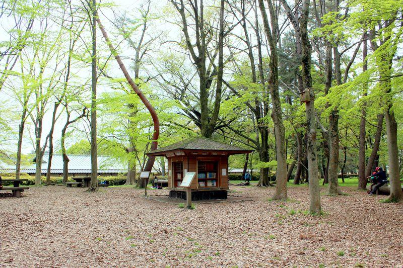 「京都御苑」にはメルヘンチックな森の図書館がある!