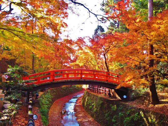 そうだ京都の紅葉名所、行こう!「北野天満宮・もみじ苑」