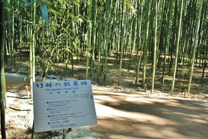 新スポット「竹林の散策路」