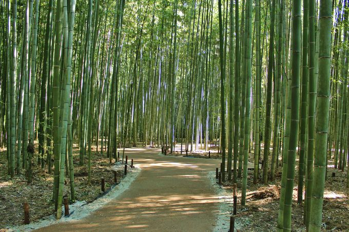 嵯峨嵐山駅から徒歩15分:竹林の散策路