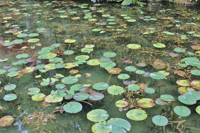 岐阜の山深く、ひっそりと佇む美しい池