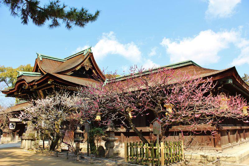 春まで待てない!冬の京都は梅をめぐろう!梅の名所5選