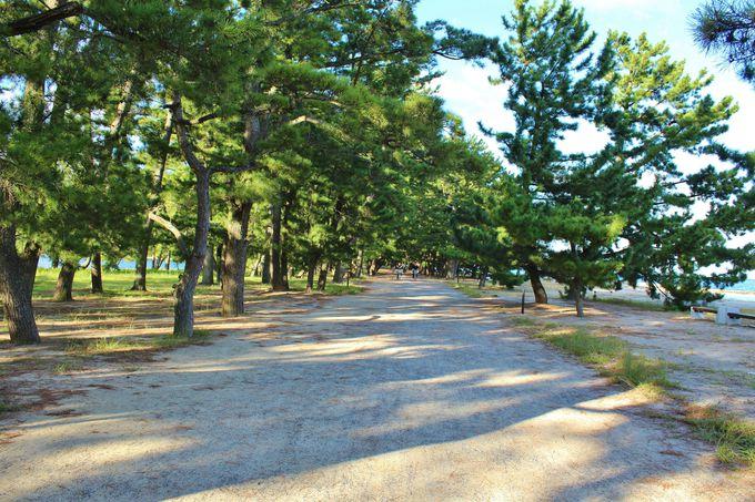 天橋立は見るだけではなく、歩きたい日本三景