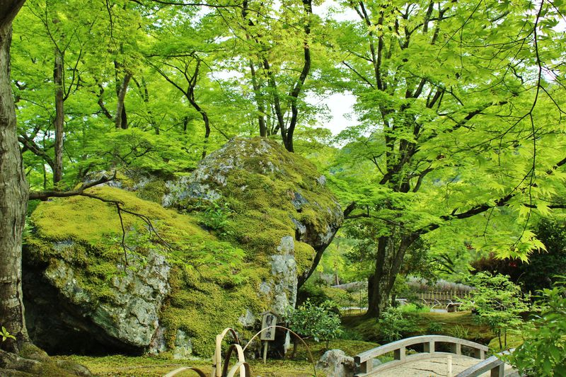 嵐山「宝厳院」の青もみじを堪能する春の特別拝観!