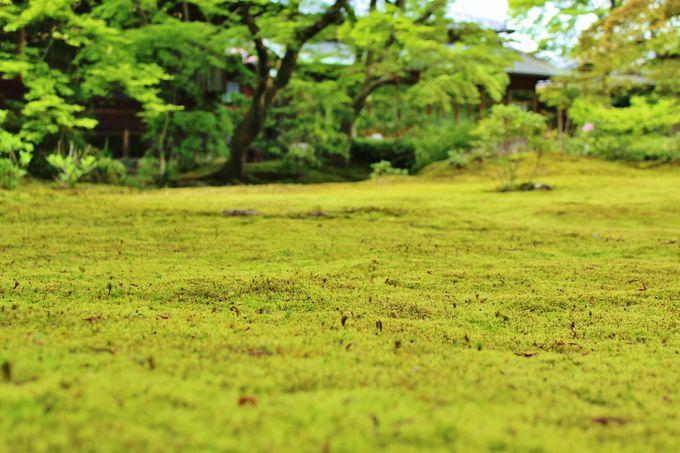 宝厳院の庭園・「青もみじ」以外も存分に堪能せよ!