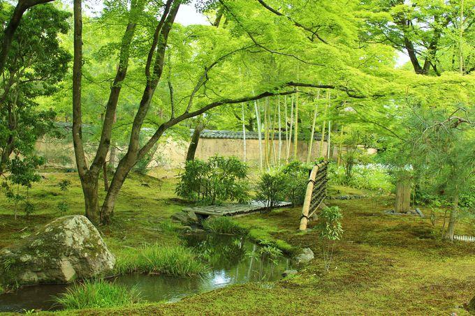 「青もみじ」をあえて楽しむ京都