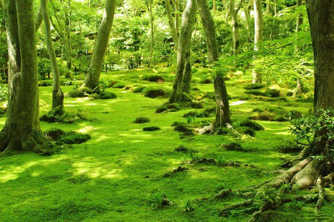 京都でも随一の苔の庭園!