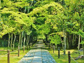 京都「鹿王院」の静寂の参道にウットリ!新緑の青もみじを堪能しよう