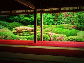 滋賀「大池寺」の蓬莱庭園はピンクに染まる絶景庭園!