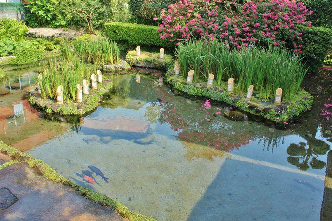 「湧水庭園 四明荘」の四方を楽しもう