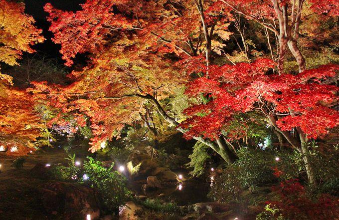 真紅に燃える紅葉!「宝厳院・獅子吼の庭」