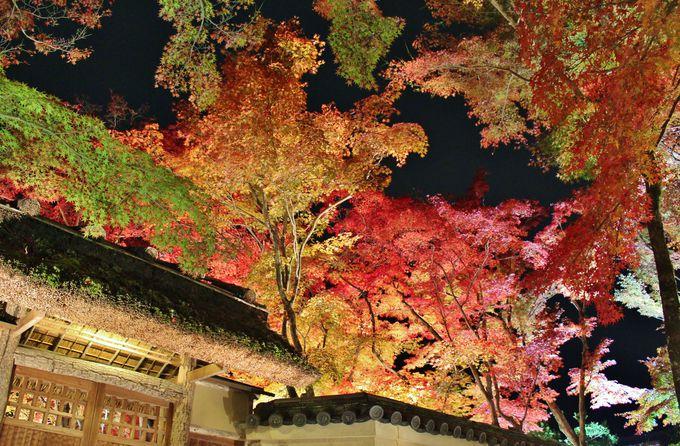 真紅の紅葉ライトアップ!秋の夜間特別拝観「宝厳院」