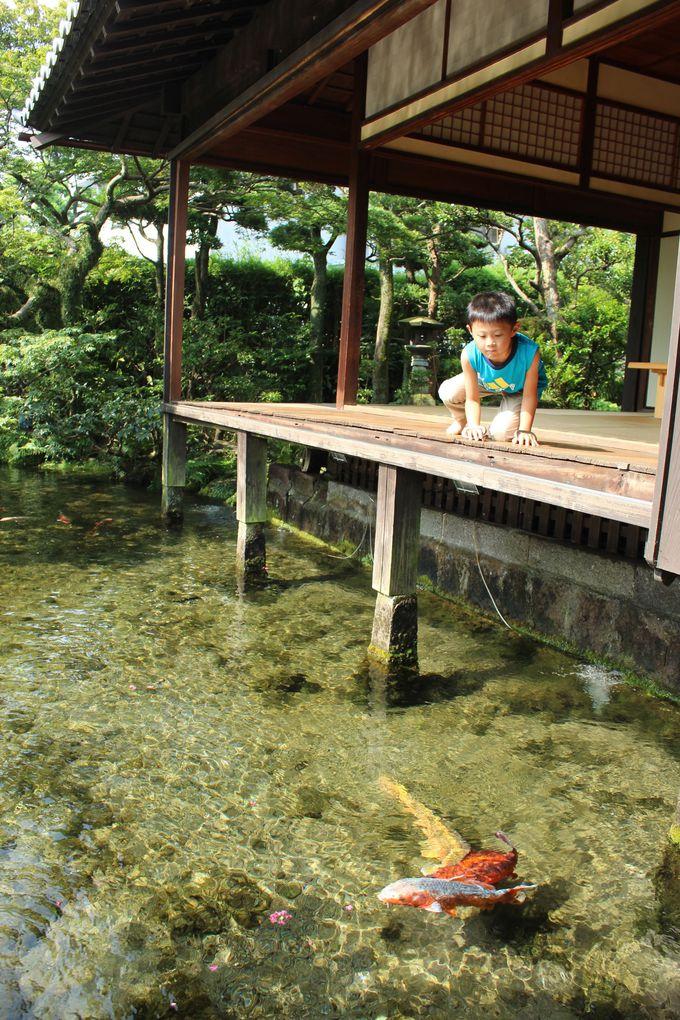 「鯉の泳ぐまち」のおすすめスポット「湧水庭園 四明荘」
