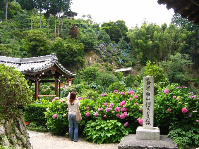 桜と紅葉だけじゃない、善峯寺の魅力とは