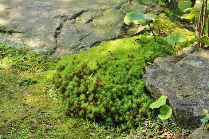 美しき湧水をたたえた「湧水庭園 四明荘」
