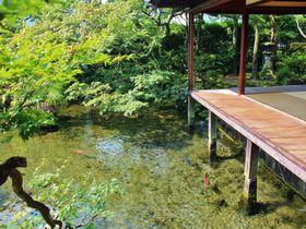 島原「湧水庭園 四明荘」は美し過ぎる水の絶景庭園!
