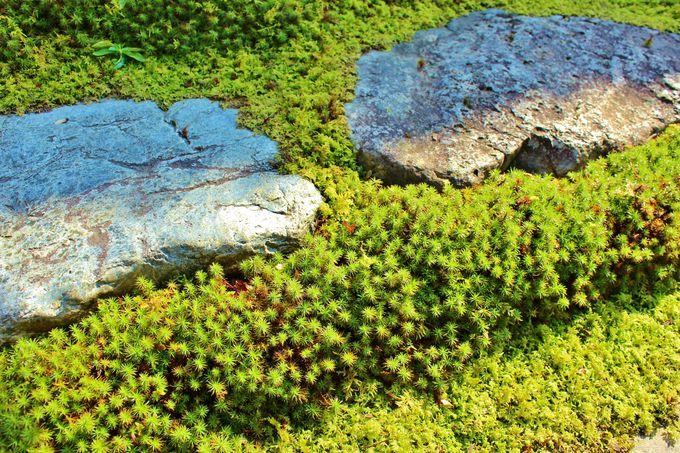 とにかく苔が素晴らしい、四季を通じて美しい庭園!