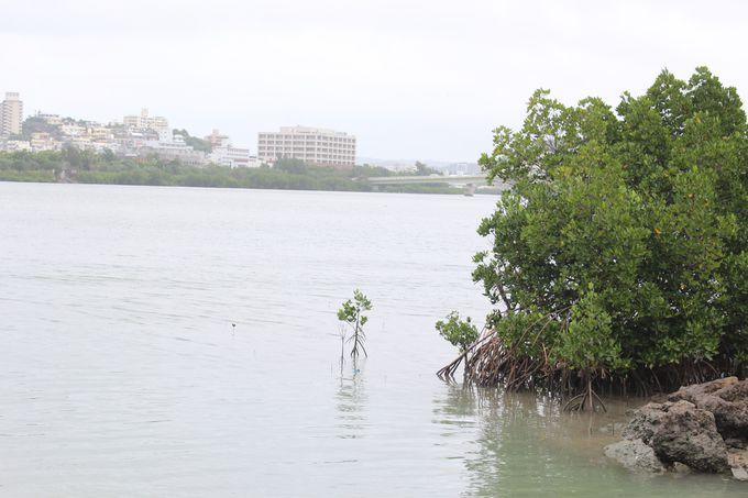 wetland「漫湖」の正体とは?