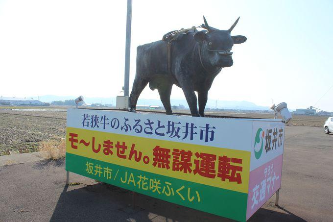 若狭牛が見つめる「牛の交差点」