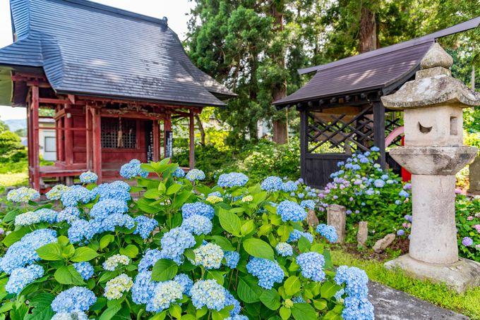 おすすめ度大!京都でも大人気のあじさいスポット