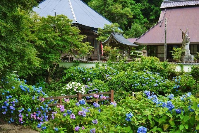 京都府北部のあじさいおすすめスポット