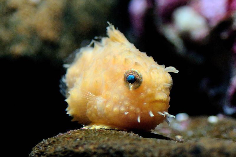 「環境水族館 アクアマリンふくしま」の見どころ徹底ガイド