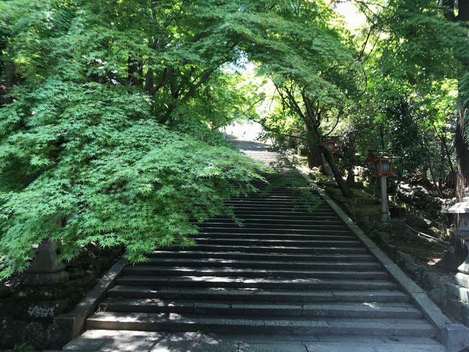 渡月橋周辺の青もみじスポット