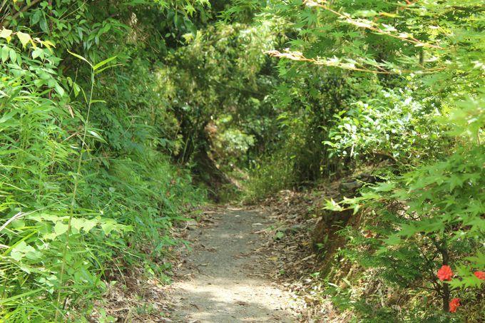 「明智越」は光秀が愛宕山へ向かったルート