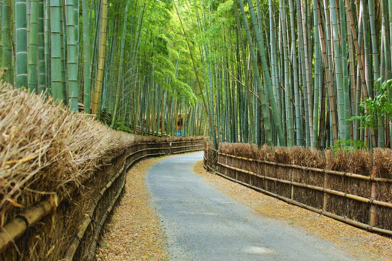 京都・向日市「竹の径」は穴場フォトジェニックスポット!