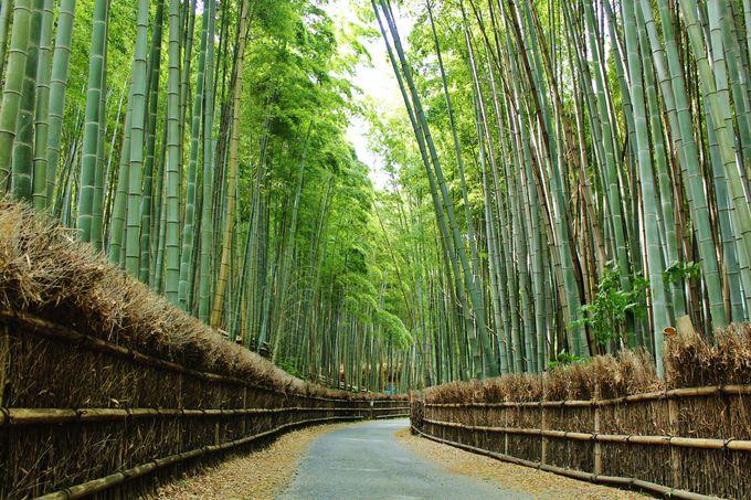 京都らしい、美しい竹林