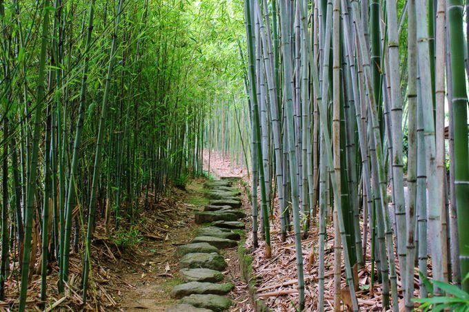 隣接の「京都市洛西竹林公園」もチェック!