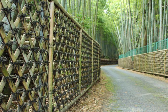 竹垣が特徴的な「竹の径」