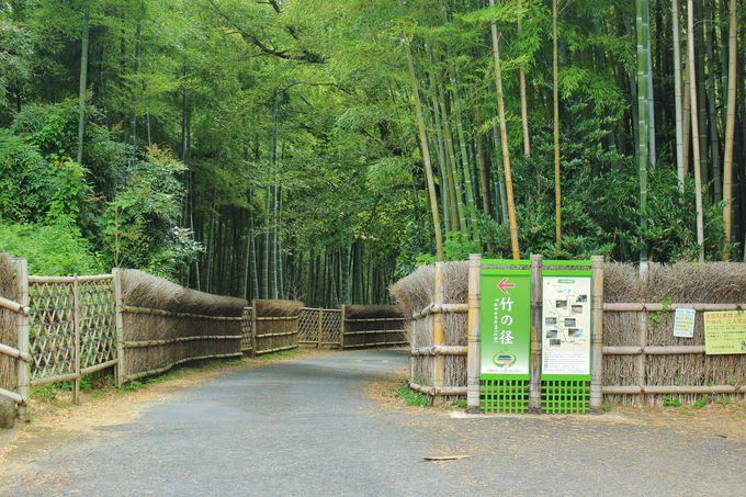 京都の筍の里・向日市