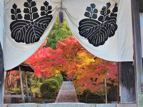 京都「酬恩庵一休寺」一休さんのお寺は穴場紅葉スポットだった