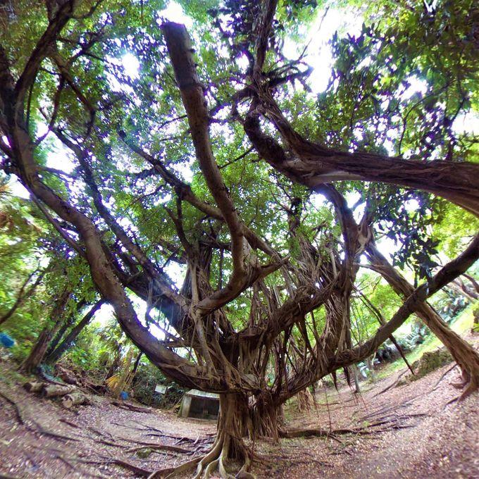 神の島・浜比嘉島を周遊しよう