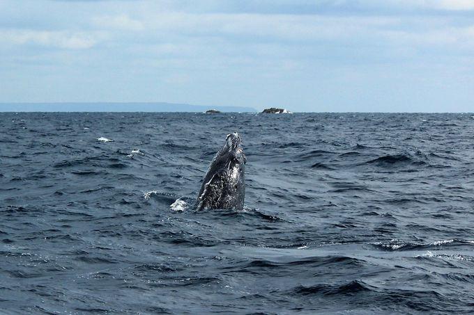 奄美大島の冬のオススメといえば・・・