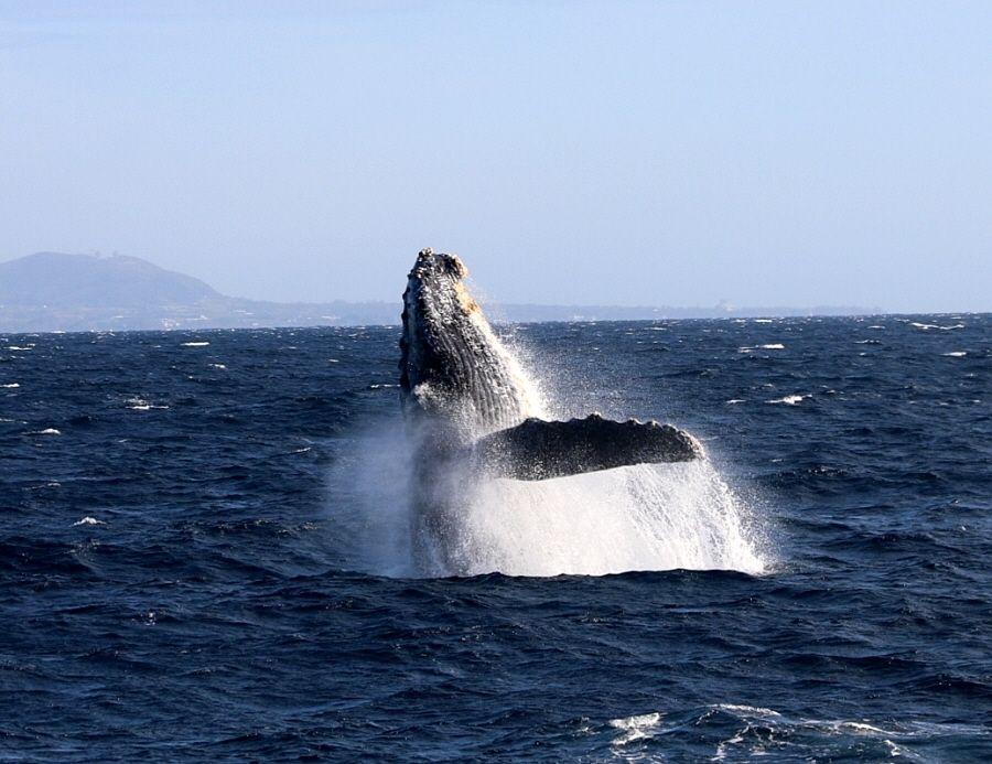 クジラの多彩なアクションを楽しもう!