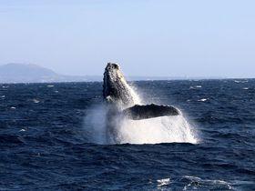 冬の奄美大島でホエールウォッチングをオススメする理由
