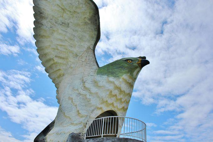 宮古島市の鳥「サシバ」とは?