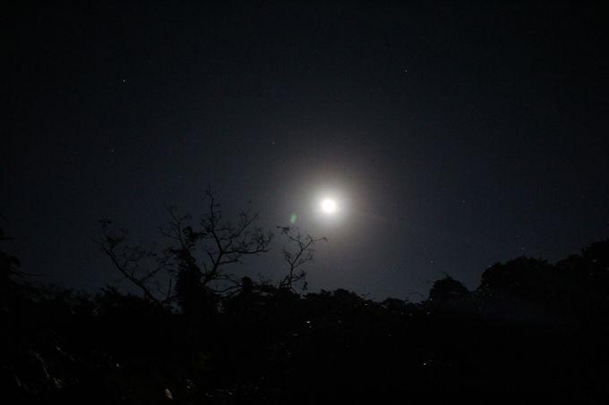 ミステリーナイトウォークで夜の森を散策しよう!
