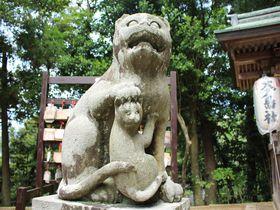 京都「金刀比羅神社」には日本唯一の狛猫がある!?