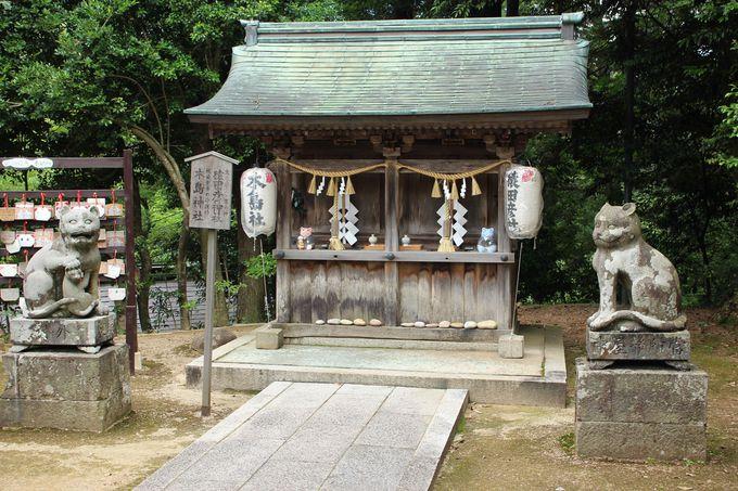 日本でココだけ!「狛猫(こまねこ)」がいる神社!