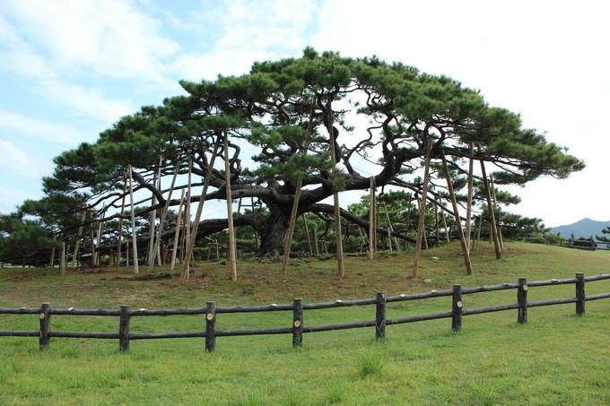 伊平屋島で外せない観光スポット 自然編