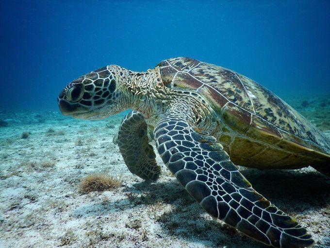 宮古島は絶景が待つサンゴ礁の島