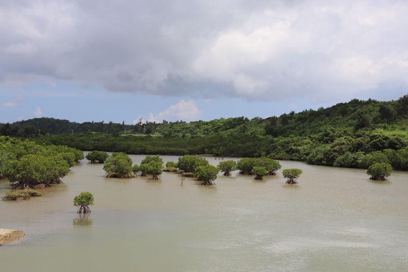 宮古島「島尻のマングローブ林」と「パーントゥ」の里へ行こう!