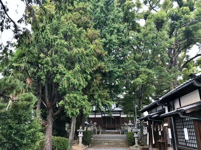 由緒ただしき玉田神社