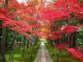 紅葉の穴場!京都「鹿王院」の静かなる参道の美を堪能しよう