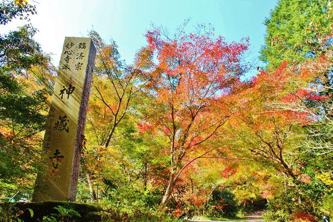 亀岡の古刹「神蔵寺」